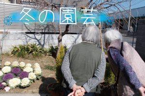 冬の園芸<