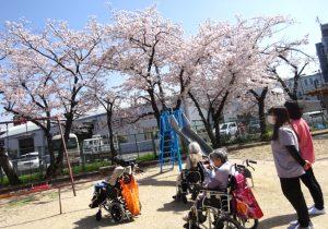 春風に吹かれて お花見散歩<