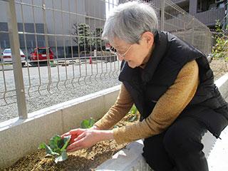 花壇での植物栽培
